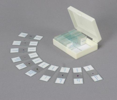 AmScope 40X-1000X Home C&F Compound Microscope 25 Slides
